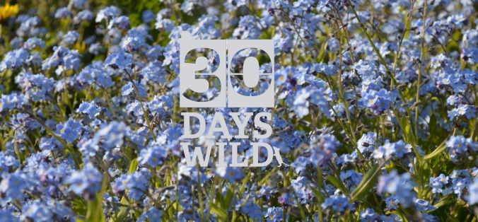 30 days forget me nots