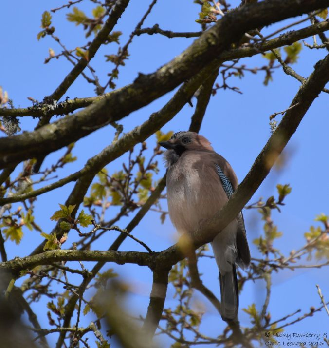 Jay at Hartlebury 2