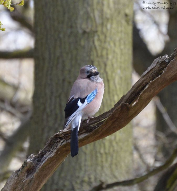 Jay at Hartlebury