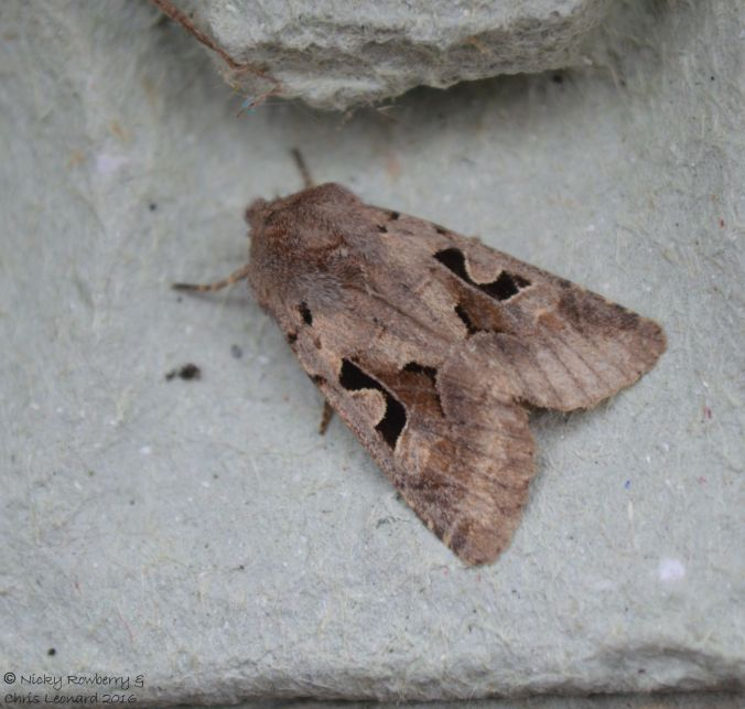 Hebrew Character (2)