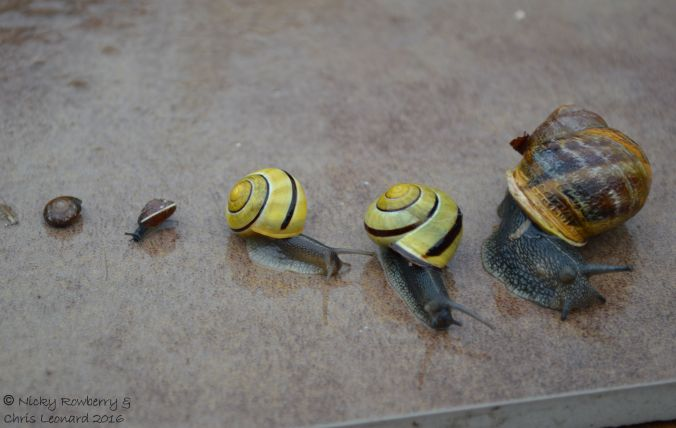 Assorted snails