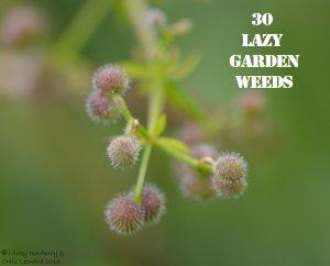 Cleavers 30 WEEDS