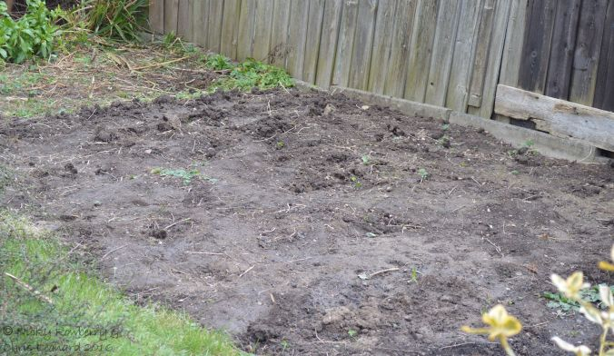 Meadow before