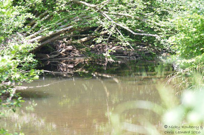 River at Knapp