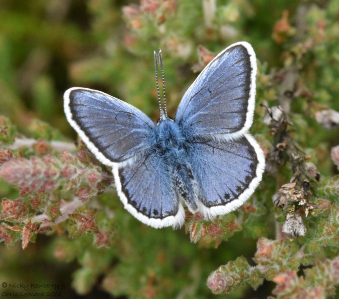 Silver studded Blue open
