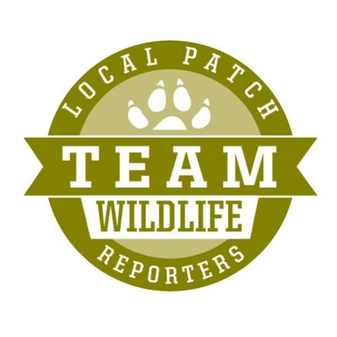 BBC Wildlife Local Patch Reporters