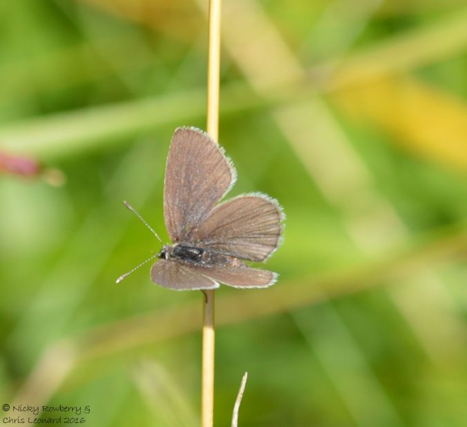 Small Blue open