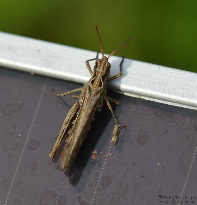 grasshopper-on-solar-panel