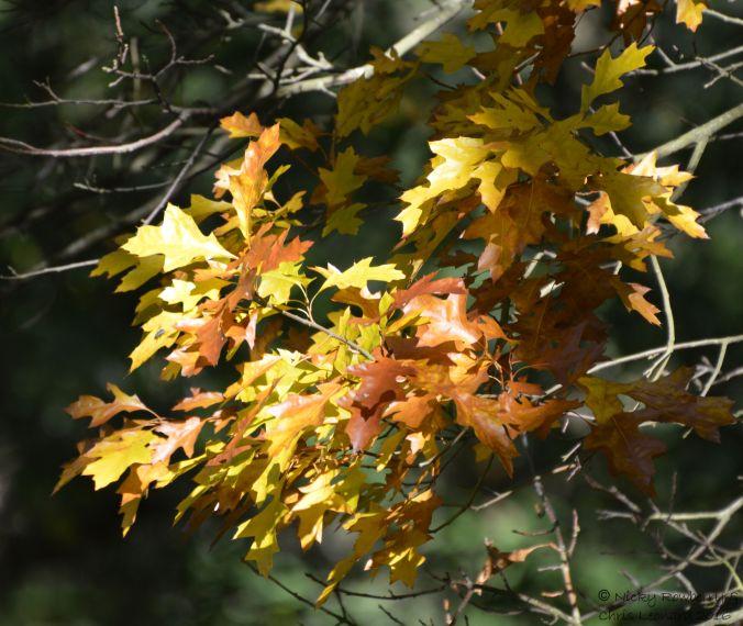 leaves-4