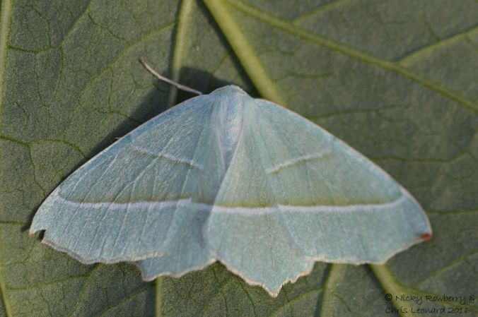 light-emerald