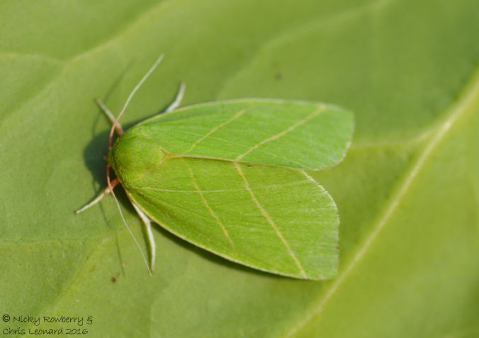 scarce-silver-lines