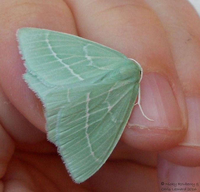 small-emerald