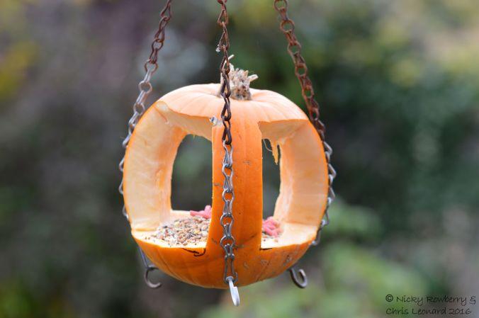 pumpkin-birdfeeder