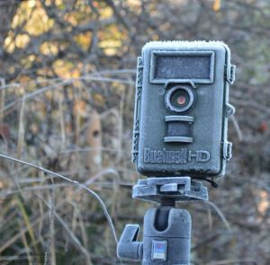 trail-cam-frost