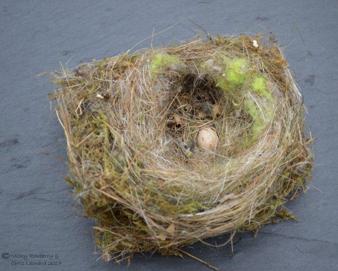 blue-tit-nest