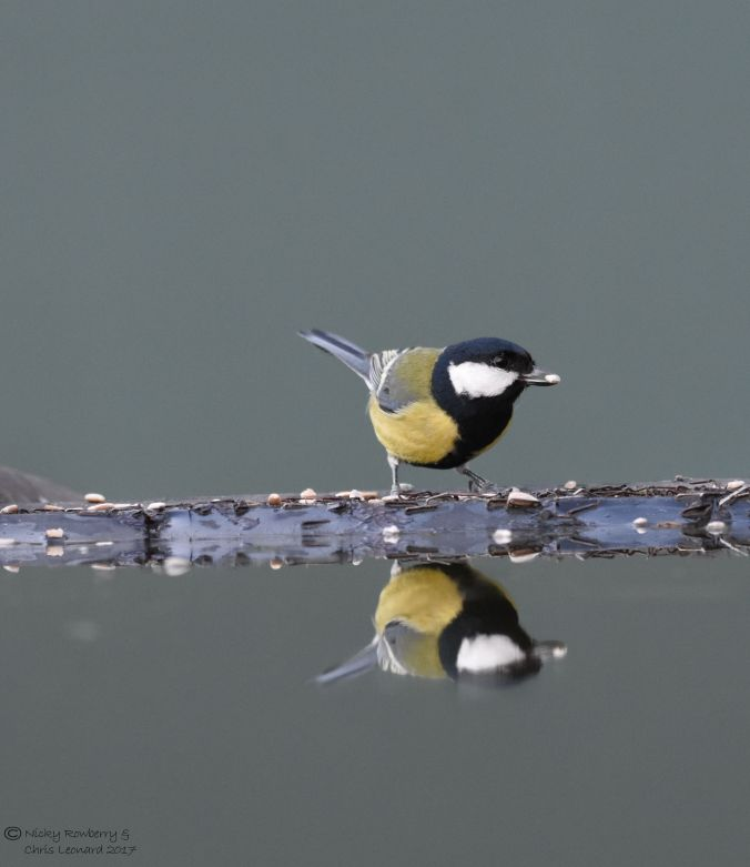 great-tit-2