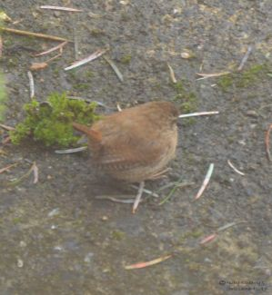 wren-on-patio-6