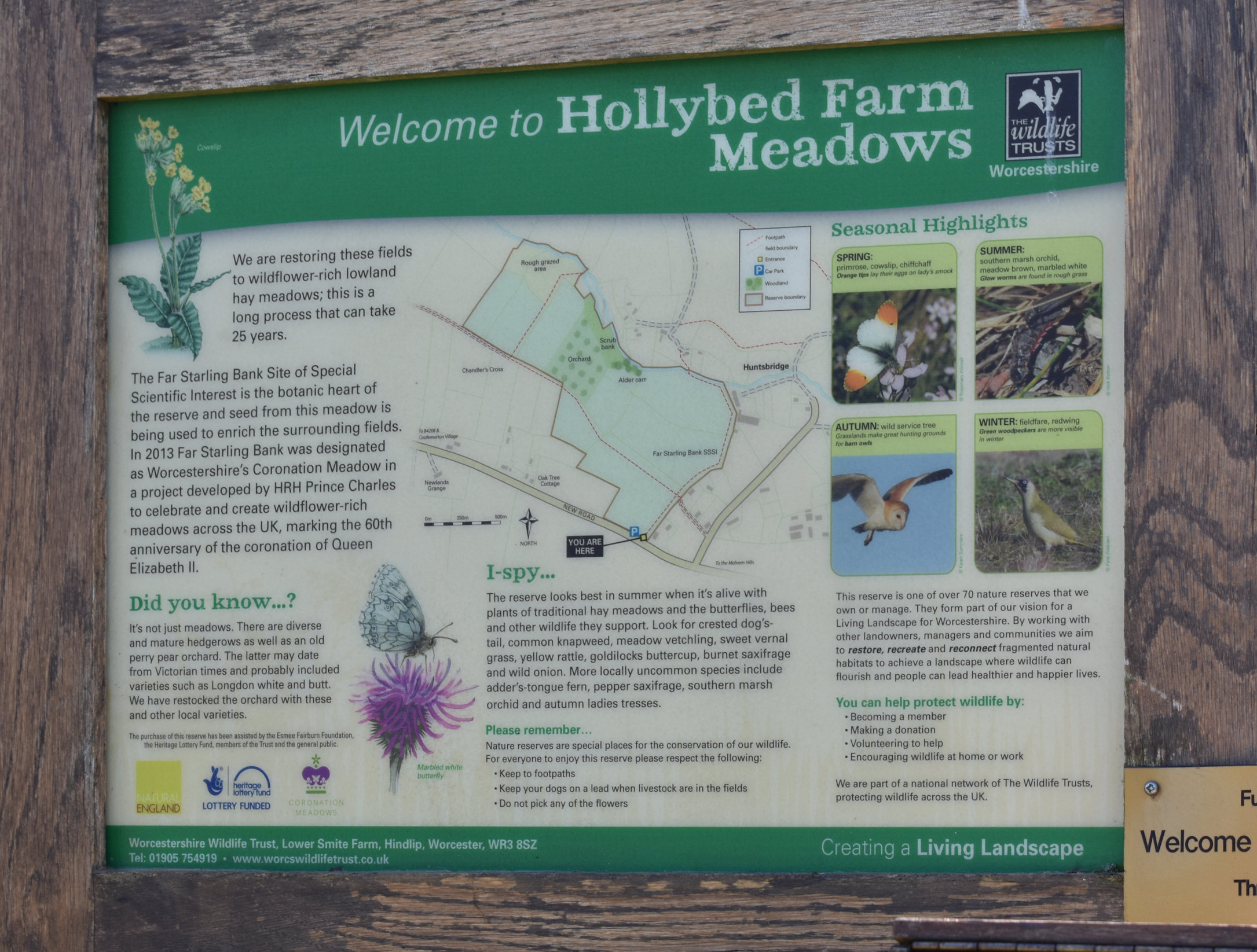 Hollybed