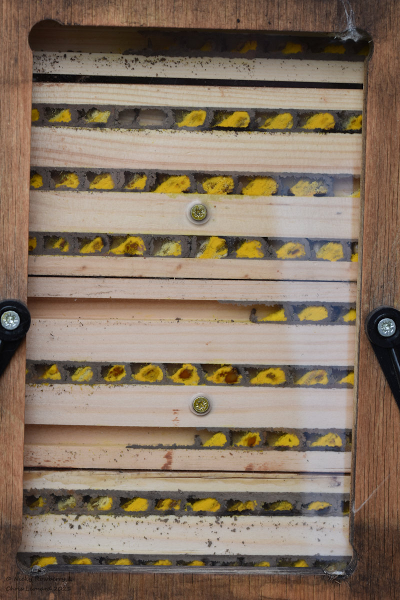 full mason bee house